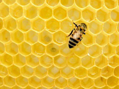 فوائد عسل الكالبتوس للبشرة والشعر وأهميته للمرأة الحامل