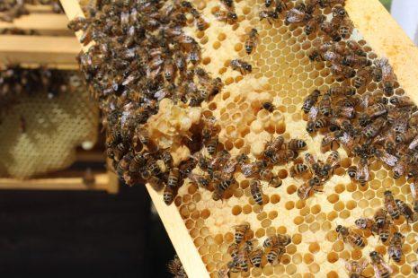 طريقة صنع العسل وفوائده العظيمة