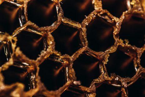 ما هي فوائد عكبر النحل لعلاج الالتهابات والحروق وتقوية الذاكرة؟