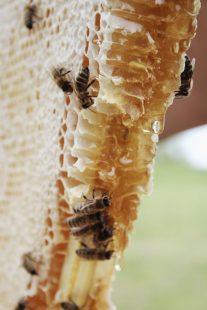 كيفية تربية النحل وإنتاج العسل والخطوات اللازمة للقيام بذلك