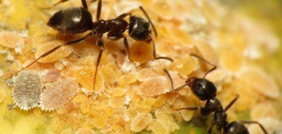 تفسير رؤية النمل في المنام لابن سيرين والنابلسي وابن شاهين