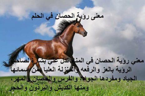 تفسير رؤية الحصان في المنام لابن سيرينلأفضل علماء التفسير