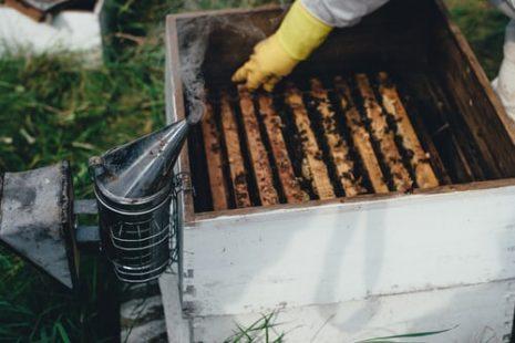 ما فائدة حبوب لقاح النحل للأطفال والرجال
