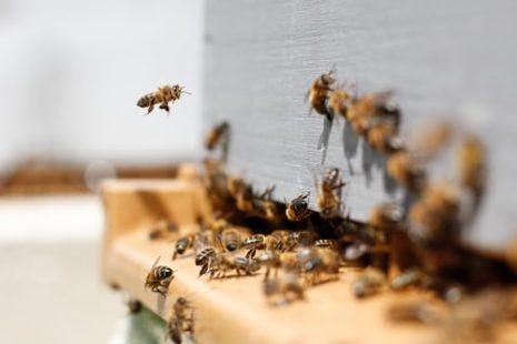 فوائد العسل مع حبة البركة للبشرة والشعر