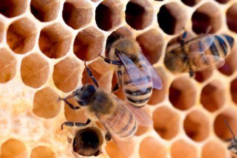كيف أعرف أن العسل أصلي وغير مغشوش